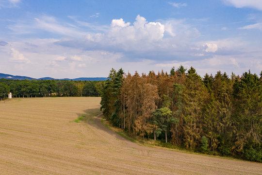Luftaufnahme vom Waldsterben mit Nadelwald