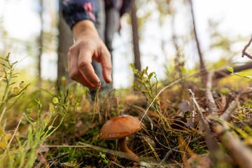 Obraz Woman picking mushroom in the forest - fototapety do salonu
