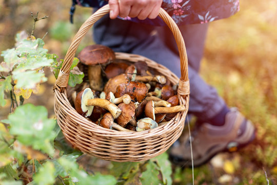 Woman picking mushroom in the forest