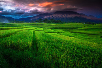 amazing clouds with sky at mountain range. greeen paddy fields noth bengkulu, indonesia