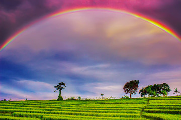 rainbow morning at paddy fields with green tree amazing light, bengkulu indonesia