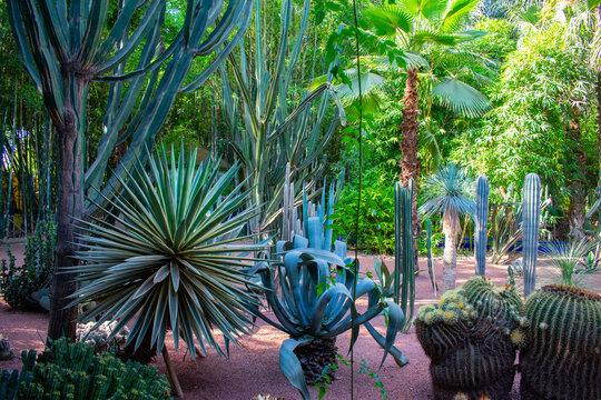 Jardin Majorelle Gardens in Marrakech, Morocco. Tropical plants and cactus