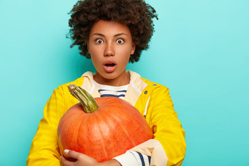 Wondered curly woman stares with eyes popped out, holds orange ripe pumpkin picked from vegetable garden, wears yellow raincoat, isolated over blue background, copy space. Autumn time concept