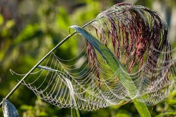sieć pająka na łące rosa - fototapety na wymiar
