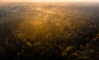 Die Herbstsonne erleuchtet die Südheide bei Wildeck / first morning sun rays enlightening a forest in lower saxony