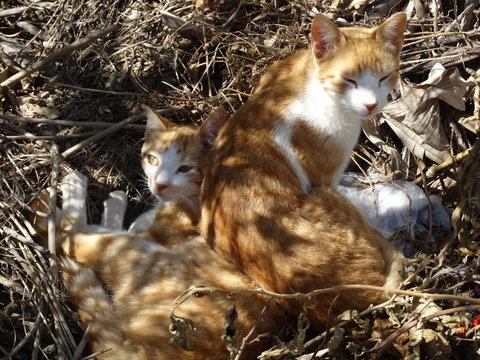cats of three Barras, municipality of serro-MG - Brazil
