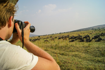 Male Eco-tourist Taking Pictures of Wildebeest and Zebra Wildlife in the Grasslands of the Masai Mara, Kenya