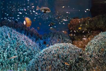 海底の珊瑚と熱帯魚の群れ