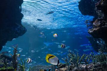 海底から見上げる海中イメージ