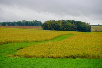 Farmland in Minnesota with green field and blue sky