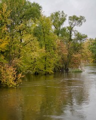 Autumn trees on a river