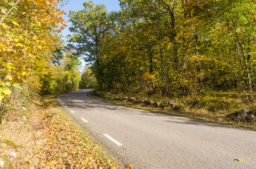 Winding country road in  fall season colors