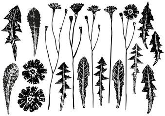 set of ink prints of dandelion leaves and flowers Wall mural