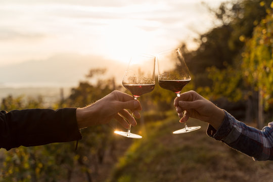 Two hands clinking red wine glass in a Vineyard during sunset