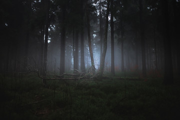 Dark misty forrest scene with dead trees shot on a foggy autumn morning. Trees with woodpecker den. Very moody, spooky and dark edit.