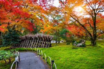 Wall Mural - Colorful leaves in autumn park, Japan.