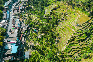 Aerial view of Terraced rice fields Bali, Indonesia.