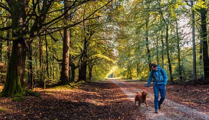Wanderer mit Hund auf Wanderweg im herbstlichen Wald / Hiker with dog on hiking trail in forest during fall