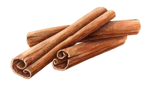 Dried cinnamon sticks  bunch watercolor illustration. Nature raw organic spice from a tree bark. Hand drawn cinnamon pile using in medicine, food and aromatherapy.  Isolated on white background.