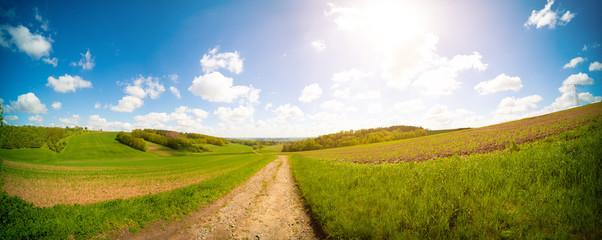 Dirty road in green summer field.  Rural road in the   field Fototapete
