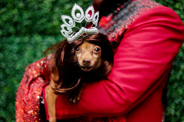 A pet dog dressed as a crowned Miss Universe is photographed at a pet fashion show celebrating World Animals Day in Quezon City,