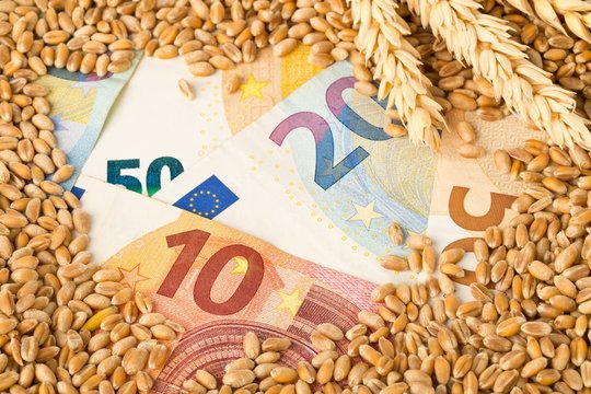 Euro banknotes covered with heap of wheat kernels with wheat ears - wheat cost or prize concept
