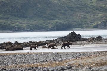 Bärenmutter mit Jungen an der Küste von Katmai, Alaska