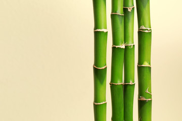 Tropical bamboo stems on beige background, space for text. Stylish interior element