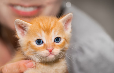 Adorable tiny ginger tabby kitten with woman detail in background. Domestic cat. Felis silvestris catus. Face of cute little kitty 5 weeks old. Small cuddly happy pet with blue eyes looking at camera.