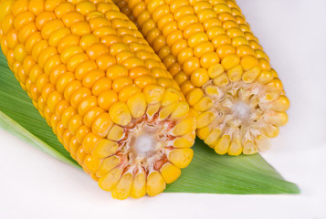 Close-up of two corn cobs on white background. Zea mays. Sweet maize of gold color on green leaf. Cross-section of corncobs with ripe yellow grains. Detail of vegan diet. Raw food with dietary fiber.