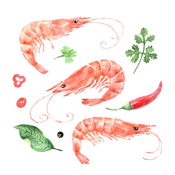 set of shrimp, watercolor seafood illustrations with herbs and spices, on a white background
