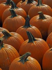Lots of Pumpkins at a Pumpkin Patch