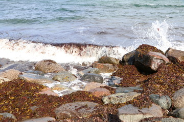 Small wave and water spray at the rocks on the beach, alga washed ashore