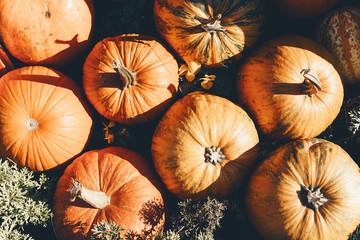 Autumn harvest of pumpkins.