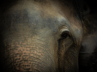 Fotorolgordijn Olifant Closeup Old elephant in Thailand sanctuary