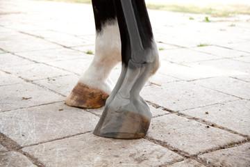 Fotorollo Pferde Pferd Röntgen Tierarzt Huf Bein Untersuchen
