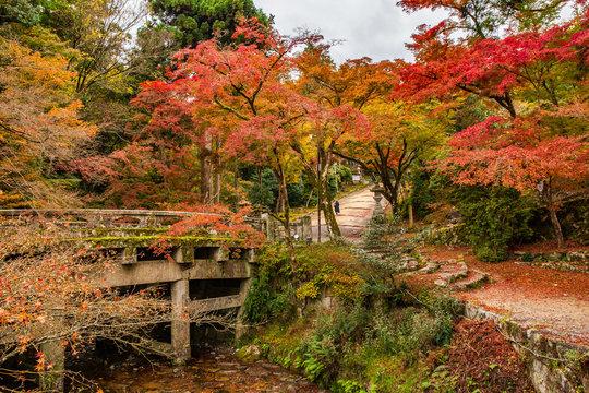 日本の秋 滋賀 日吉大社48  Autumn in Japan, Shiga Prefecture, Hiyoshitaisha #48