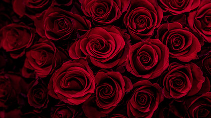 Natural red roses texture background,Beautiful Rose texture for cover or banner background,Love romantic background.