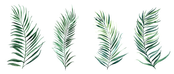 Set of watercolor illustrations palm leaves. Nature design for wedding invitations, posters or cards.