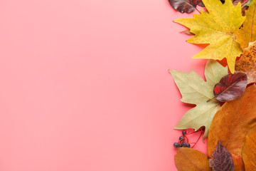 Wall Mural - Beautiful autumn leaves on color background
