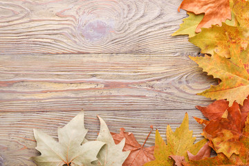 Different autumn leaves on wooden background