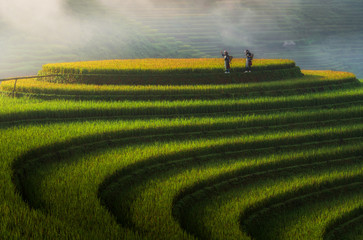 Foto auf Acrylglas Reisfelder Landscape rice fields on terraced of Mu Cang Chai, YenBai, Vietnam
