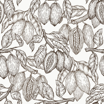 Cocoa vector seamless pattern. Chocolate cocoa beans background. Vector hand drawn illustration. Vintage style illustration.