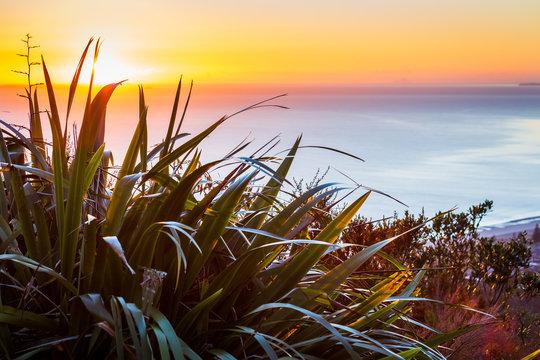 Sunrise over the ocean framed by New Zealand Flax