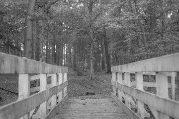 A black  and white shot of a wooden bridge in an old wooded area