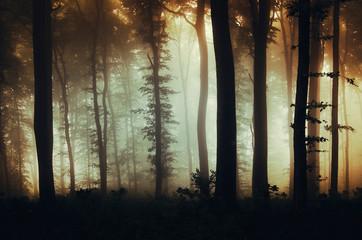 Fotorollo Olivgrun dark mysterious woods background, misty forest at night