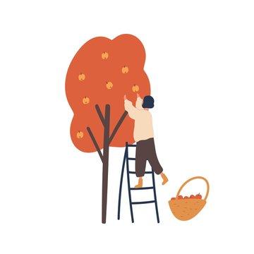 Girl gathering autumn harvest flat vector illustration