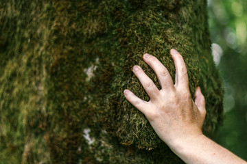Hand of environmentalist touching tree trunk covered with moss