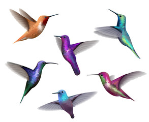 Flying hummingbirds. Little colored birds exotic jungle colored little hummingbirds vector realistic tropical collection. Hummingbird colorful beak, flying tropical illustration