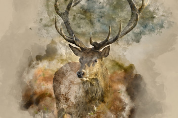 Digital watercolor painting of Beautiful red deer stag Cervus Elaphus with majestic antlers in Autumn Fall forest landscape